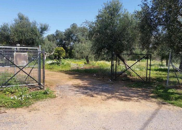 Land plot in Messinia